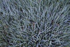 Blue and grey grass Stock Photos
