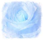 Blue Grunge Background With Rose. Ice Blue Grunge Background With Beautiful Rose Stock Photography