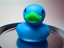 Blue gum duck 2 Stock Photography