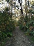 Blue gum trail. Bush walking stock image