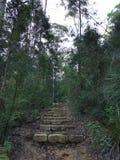 Blue gum trail. Bush blue gum trail walking stock image