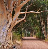 Dirt Road Royalty Free Stock Photo