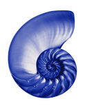 Blue half nautilis,isolated Stock Images