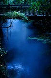 Blue haze. In the jungle stock image