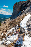 Rocky Mountain summer hiking views. Blue Heeler dog hiking in the Canadian Rocky Mountains, Nihahi Ridge Kananaskis Country Alberta Canada Stock Photo