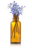 Blue hepatica flowers in a bottle Stock Photo