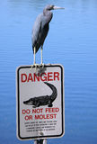 Blue heron on Florida sign Royalty Free Stock Image