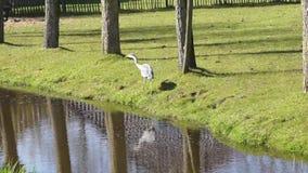 Blue heron in a meadow stock video footage