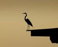 Blue heron perched on dock. A silhouetted view of a blue heron perched on a dock at sunset Royalty Free Stock Photography