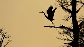 Blue Heron Silhouette Royalty Free Stock Image