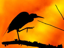 Blue Heron silhouette Royalty Free Stock Photo