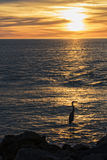 Blue Heron Silhouette At Sunset Stock Image