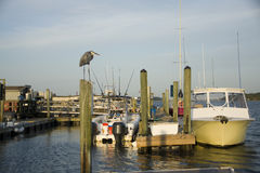 Blue Heron Watching Over Fishing Boats Royalty Free Stock Photography