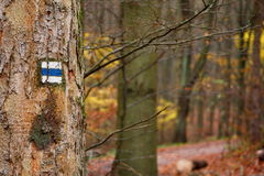 Blue hiking mark on a tree Royalty Free Stock Photo