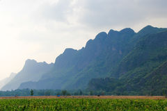 Blue hills behind a green tobacco feild. In rural laos royalty free stock images
