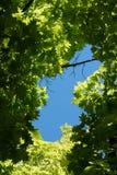 Blue Hole. Blue sky seen through a break in the foliage Stock Photos