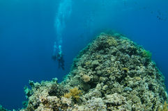 Blue hole, Dahab Royalty Free Stock Photo