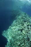 Blue Hole, Dahab,Egypt Royalty Free Stock Photos