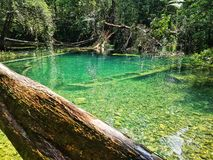 Blue hole. Daintree swimming holes royalty free stock photos