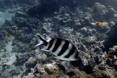 Underwater Shot from Blue Hole Dahab Egypt stock photo