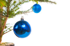 Blue holiday balls on christmas tree Royalty Free Stock Images
