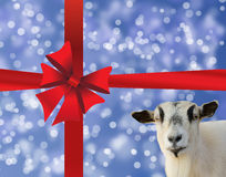 Blue holiday's background with red bow. Holiday blue background with gift red bow and goat like a symbol of 2015 year Stock Illustration