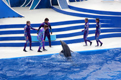 Blue Horizons Dolphin Show, SeaWorld, San diego, California. USA with playful dolphins, flying birds and thrilling performers keep you fully entertaned royalty free stock images