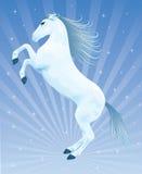 blue horse Arkivfoto