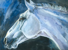 Blue horse Stock Photo