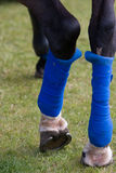 Blue horse leg bandages Royalty Free Stock Image