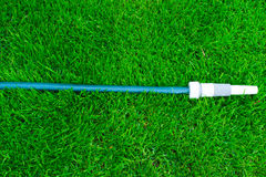 Blue hose on the green grass Royalty Free Stock Photo