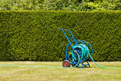 Blue hosepipe on a lawn against green hedge Royalty Free Stock Photos
