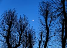 blue hour Στοκ Εικόνα