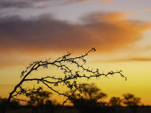 Blue hour in the Kalahari Stock Photo