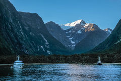 Blue hour in the Milford Sound Royalty Free Stock Image