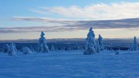 Blue hour winter landscape. Winter wonderland in Hedmark county Norway. Frozen trees on hedmarksvidda stock photography