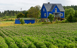 Blue house and a potato field Royalty Free Stock Photo