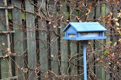 Blue house-shaped bird feeder Stock Photography