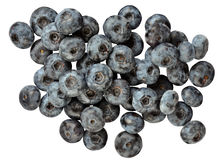 Blue huckleberry Royalty Free Stock Photo