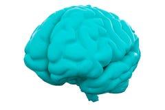 Blue Human brain on white background. Anatomical Model, 3d illustration royalty free illustration