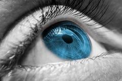 Blue human eye Royalty Free Stock Image