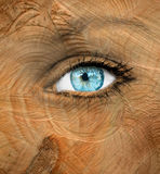 Blue human eye with wood texture - Aging concept Stock Images
