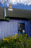 Blue hut with yellow flowers. Old farmers hut blue painted with blossoming flowers around stock photos