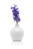 Blue hyacinth flower in vase Stock Images