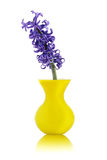 Blue hyacinth flower in yellow vase Stock Photo