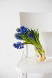 Blue hyacinth in a vase Royalty Free Stock Photography