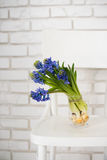 Blue hyacinth in a vase Royalty Free Stock Photos
