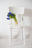 Blue hyacinth in a vase Stock Photos