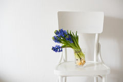 Blue hyacinth in a vase Stock Image