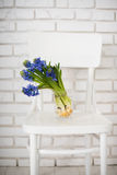 Blue hyacinth in a vase Stock Photo